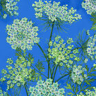 Henry Glass Botanical Blooms Blue Queen Annes Lace