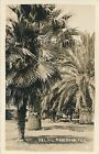 RPPC Palms in Mercedes Texas TX unmailed real photo postcard