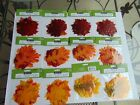 12 NEW PACKAGES Fabric MAPLE OAK Leaf Leaves Fall Autumn