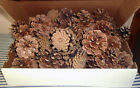 Lot of 40 Craft Project Wreath Sturdy Clean Wisconsin Pine Cones 2 to 3