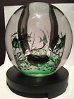 Vintage ORREFORS Glass EDWARD HALD Aquarium GRAAL Fish VASE 5 1 2 SIGNED 841B