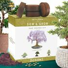 Bonsai Tree Kit Grow 4 Types of Miniature Trees From Seed A C Natures Blossom