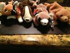 Lot of (4)Ty Beanie Babies Cubbie, Ringo, Bruno, and Chip