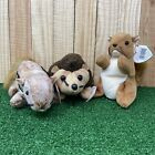 Lot of 3 Ty Beanie Baby Babies Chipper, Prickles, and Nuts