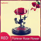 Forever Rose in Glass Dome Beauty And The Beast Preserved Eternal Gift Mothers