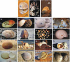 S05092 China phone cards Shell puzzle 76pcs