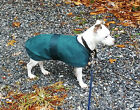 High Spirit Dog Rain Coat Sheet Equestrian Horse Blanket Style Keeps Pup Dry