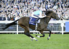 FRANKEL RIDDEN BY TOM QUEALLY 03 HORSE RACING PHOTO PRINT 03