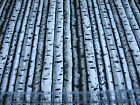 3 Yards Quilt Cotton Fabric - Timeless Treasures Nature Birch Trees Bark Stripe