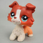 Littlest Pet Shop Collection Collie Dog Puppy Blue Eyes #1542 Rare Cute Loose