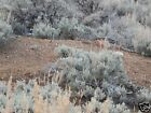 20 acre Placer Claim VIRGINIA WISH 2  CREEK WATER