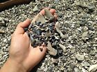 THE BEST Fossil Shark Tooth Dig Material Teeth Megalodon Tiger Bull Necklace