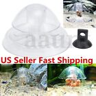 8cm Clear Snail Trap Aquarium Fish Tank Plants Planarian Leech Catch Environment