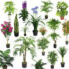 LARGE Artificial Palm Trees Ficus Plants Bamboo Tropical Yukka ULTRA REALISTIC