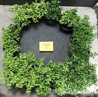 Bonsai Tree Kingsville Boxwood Pre FOREST Group Ready To Pot As Bonsai Forest