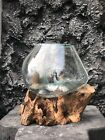 Medium Hand Blown Recycled Glass  Reclaimed Teak Wood Terrarium Fish Bowl Vase
