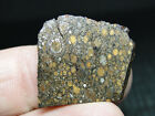 NWA 801 Carbonaceous CR2 Chondrite 0801 0007 433g w COA Beautiful Class