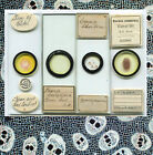 Four Botanical Microscope Slides, by Watson, Flatters, and others