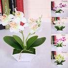 Artificial Butterfly Orchid Flower Wedding Home Desk Decor Fake Floral Bonsai US