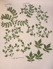 Pretty Leaves And Stems Die Cuts card making scrapbooking 35 Pc Set