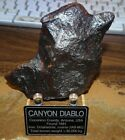 304 gm  CANYON DIABLO IRON METEORITE  TOP GRADE  ARIZONA STAND AND LABEL