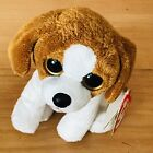 Ty Beanie Baby - BANJO the (Big Eyes) Beagle Dog (6 Inch) MINT with MINT TAGS