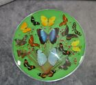 Vintage Butterfly Display Round Convex Glass Wall Hanging 15 Diameter