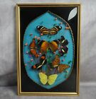 Vintage Butterfly Display Convex Glass Wall Hanging 125 x 85
