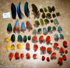 Scarlett Macaw Parrot Feathers  50 + Feathers