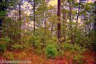 Residential lot Fairfield Glade Tennessee near lake golf  country club