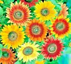 SUNFLOWER 60+ SEEDS AUTUMN BEAUTY HELIANTHUS ANNUUS FLOWER GIANT ANNUAL TALL USA