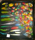 100+ SCARLET MACAW  BLUE  GOLD AND ASSORTED PARROT FEATHERS RARE