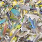 50 PARROT FEATHERS Bird CRAFT Macaw WING Tail Mix Blue Green Red Yellow Flytying