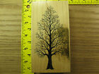 Rubber Stamp PSX Bare Winter Tree K1501 Scenery Nature Stampinsisters 2637