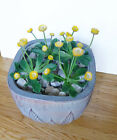 Mini Artificial Yellow Small Flower Grass Landscape Set of 4
