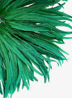20 Pcs Dyed Kelly Green Rooster Coque Tail Feathers 10 12 US Seller