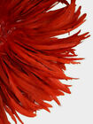 20 Pcs Red Rooster Coque Tail Feathers 8 10 US Seller