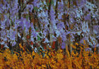 Wild wisteria Original framed impressionistic oil on paper painting from artist
