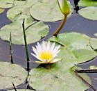 AWESOME A Water Flower IMAGE ORIGINAL Digital Photo Free Email 1 DAY SHIPPING