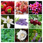 Fragrance Oil For Burning Diffusing Candle and Soap Making Supplies 1 to 16 Oz