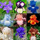 50pcs/Bag Iris Flower Seeds Rare Bearded Yard Seed Nature Bonsai Flower Plants