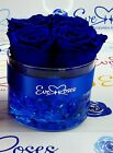 Royal Blue Preserved Roses Real long lasting Luxury Roses Infinity Roses