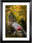 Photography Wall Art Print Covered Bridge Flume Gorge Archival Qty Matte Paper