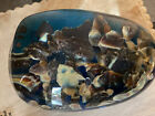 Liberty Paperweight Riverbed 2006 Glass Really Cool And Rare Look At Pictures