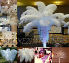 Wholesale 10 50 100pcs Natural OSTRICH FEATHERS white 20 55cm 8 22inch Wedding