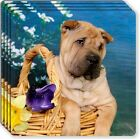 Chinese Shar Pei Rubber Coaster Set