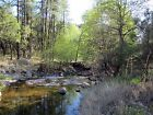Bear Creek Gold Mine Grant County New Mexico Rockhounding Placer Pines Altos