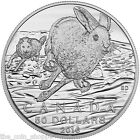 HARE 2016 50 1 2 oz Fine Silver Coin Royal Canadian Mint