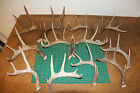 12 1 Cut off Whitetail deer antlers antler mule sheds shed dog chews lot 121