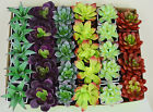 Succulents Lot Mini Modern Potted Artificial Flowers Plants Potted Fake Decor